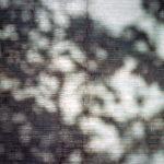 film photography lomo