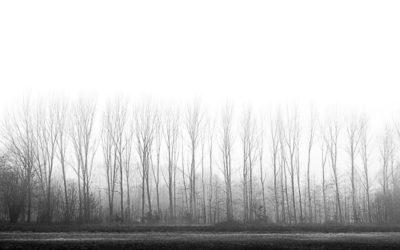 mattine di nebbia